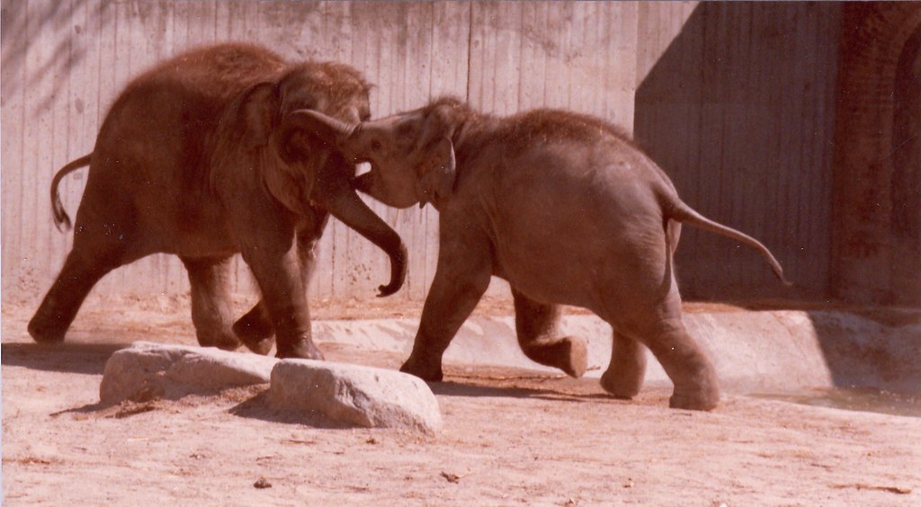elefant danmark