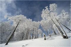 Lindux 0002 (Ezcurdia) Tags: snow miguel de nieve nevada icy hielo pamplona aralar urbasa ibaeta san frozentrees artesiana lindux nieve aralar lanzurda pamplona