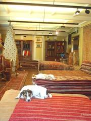 Echando una siestecita (rosaura.cristina) Tags: italy dog roma shop carpet italia tienda perros alfombras persas