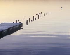 Path to the Seagull ((Virginie Le Carr)) Tags: lake france reflection sunrise landscape seagull lac paysage reflets pontoon ponton mouette leverdesoleil sanguinet walkingonwater marchersurleau