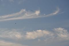 Cirros. Plaza del Pelcano (Sevilla) (galianolorenzo) Tags: geografafsica physicalgeography meteorologa meteorology nubes clouds sevilla avifauna biogeografa