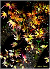 Down To Earth (lukiassaikul) Tags: plants flora digitalpainting imagemanipulation photopainting creativephotography