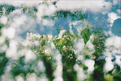 Multiple Exposure (Film by Emily) Tags: doubleexposure tripleexposure multipleexposure green bokeh nature summer