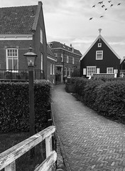 Flying on Marken (58lilu58) Tags: holland birds monocromo nederland uccelli architettura bianconero marken olanda