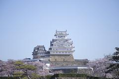 201604024219 (K.masao) Tags: castle cherrytree nationaltreasure himejijo japanmasaokatayama