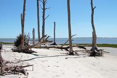 Assateague Island (Ann Kerwin) Tags: 2 island 004 chincoteague 42016