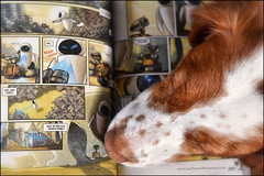 "20-52 ""Eva and her freckled nose"" (Dave (d stop - the photon whisperer)) Tags: dog brittany comic pixar comicbook rest spaniel walle 52weeksfordogs 52weeksforeva"