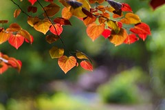 sunny afternoon (gwuphd) Tags: leaves zeiss diy bokeh sunny foliage f19 140mm projectionlens petzval kipronar