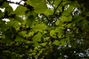 Branches: Depth of Field (ItsMeBjorn) Tags: park city urban london nature naturallight richmondpark londonpark outdoorlight nikond3300