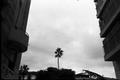 1 (michaelivnitsky) Tags: bw color film 35mm tel aviv d76