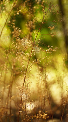 More walkabout shots (judith511) Tags: sunshine weeds dying naturethroughthelens