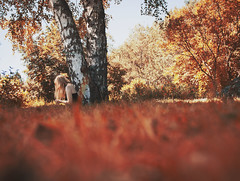 35/100 (annahenrys) Tags: autumn trees red summer portrait orange selfportrait nature woods sweden selfportait