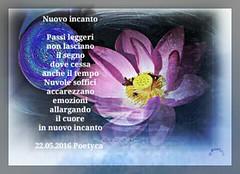 Nuovo incanto (Poetyca) Tags: featured image immagini e poesie sfumature poetiche poesia