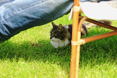 I hide and I listen... (martine_vise) Tags: pet cute cat chat extrieur cutecat sunnyday funnycat cuteanimal animaldecompagnie catlife catphotography beatifulcat