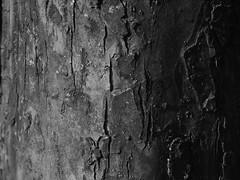 Textur... (sebastian.seipp) Tags: minolta dimage a200 greyscale