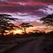 Sunset in Ndutu 8-16