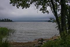 Shades of yesterday (Joni Mansikka) Tags: trees sea summer green nature june clouds suomi finland dark landscape outdoor balticsea shore archipelago sauvo
