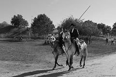Campino (Hugo Areal) Tags: bw horse pb lance santarm cavalo vaquero ribatejo campino cattleherder pampilho