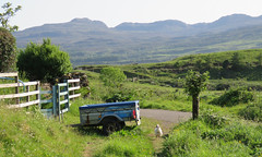 (Rodents rule) Tags: bird chicken scotland highlands eigg
