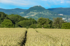 Tracks through the field (Alias_Axel_Ryder) Tags: trees sky 6 tree alex field canon eos corn d tracks feld spuren himmel wolken gelb axel alexander grn blau ryder wald bume baum korn getreide reutlingen bewlkt jettenburg wiesner achalm kusterdingen