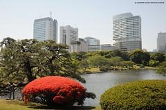 TOKYO, Hamarikyu Garden (http://russogiuseppefotoeviaggi.wordpress.com/) Tags: japan garden tokyo asia viaggi hanami hamarikyu tradizioni