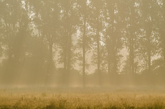 Frh am Morgen - Early in the morning (Der Gnurz) Tags: fog nebel morningfog inthemorning morgennebel ammorgen