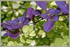 _JVA7550_DxO (mrjean.eu) Tags: park pink flowers blue france flower macro green fleur rose yellow fleurs jaune garden nikon jardin vert bleu botanic lorraine botanique parc metz 105mmf28