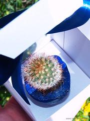 scatola-bomboniera-vaso-cactus-matrimonio-faidate-vanydesign-tutorial-32d (www.VanyDesign.com) Tags: cactus diy matrimonio tutorial bomboniera nozze bomboniere vasetto