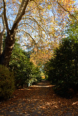 Pathway of Leaves (Jocey K) Tags: autumn trees newzealand christchurch sky plants leaves shadows may pathway monavale