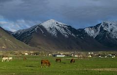 Horse Pasture and Mountains Salem Utah (PhotoOutpost (Rex Biggers)) Tags: horses mountain green field landscape scene pasture utahlandscape