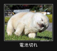 # # # (Demochi.Net) Tags: life cute sexy japan fun japanese motivator culture    demotivator               demotivators    r18      motivators