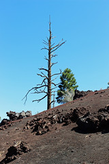 Edge of Sunset Crater Volcano (criggle1) Tags: arizona parks lanscapes