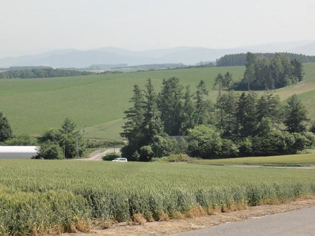 3日目:美瑛の丘めぐりへ|