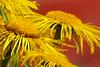(evisdotter) Tags: flowers light macro yellow bokeh blommor åland sooc awesomeblossoms amazingdetails mygearandme mygearandmepremium mygearandmebronze mygearandmesilver mygearandmegold mygearandmeplatinum silveramazingdetails