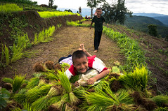 Happiness (peach018) Tags: people children happy kid child rice happiness laugh farmer agriculture