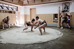 Sumo (solrac schurw) Tags: japan training tokyo asia sumo asie wrestlers stable japon entrainement ecurie lutteurs sumotoris