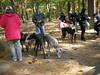 GreyhoundPlanetDay2010010