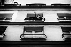 paris 2013 (beryl) Tags: morning windows blackandwhite bw paris france apartments dale balconies waving curlers lemarais nikond600 silverfx