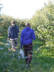 walking the orchards (ais_t) Tags: fall apple wisconsin midwest harvest orchard madison medicine calling wi