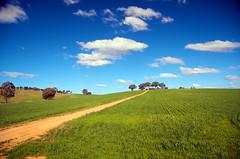 Rural NSW, Australia (James Kemlo (Junpei Hayakawa)) Tags: rural landscape australia nsw farms agriculture pastureland jameskemlo junpeihayakawa