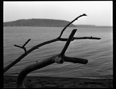 Reaching, Pepin's Shore (CreativeMJP) Tags: white lake black art nature wisconsin river mississippi lens landscape stand pentax stockholm fine delta scene 400 100 rodinal development ilford 67 pepin 105mm