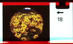 rudbekia (pho-Tony) Tags: camera old fish color colour eye film toy iso200 miniature lomography fuji toycamera wide fisheye number novelty edge 200 frame pocket expired 16mm markings 170 instamatic cartridge perforation fujicolor c41 subminiature arror tetenal autaut 170degrees edgemarkings fisheyebaby110
