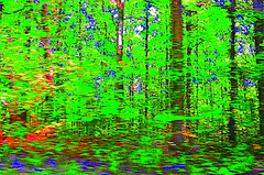 Can you see the forest among the trees? (pjpink) Tags: trees abstract fall colorful kentucky ky september hss 2013 pjpink
