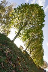 Tree line / Baumreihe