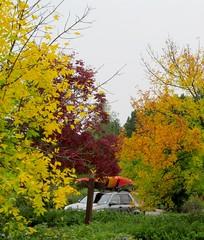 fall (Bill Steffen) Tags: fall kayak steffen