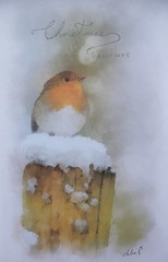 Merry Christmas to you all (alanpeacock2) Tags: christmas winter snow robin painting watercolour merrychristmas happynewyear christmascard seasonsgreetings robinredbreast cockrobin