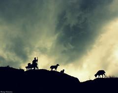 Entre nosotros, slo los pastores viajan. -Entonces ser pastor... (Ferny Carreras) Tags: sky clouds shadows cel cielo nubes monday pastor coelho sombras lunes sheps pirineos pirineus nuvols lleida elalquimista dilluns ovejas pyrinees ovellas lrida bo valldebo
