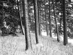 Snow Fall (Rob Scumaci) Tags: trees bw snow tree blackwhite snowy snowstorm blizzard amherst westernnewyork amherststatepark blizzard2014