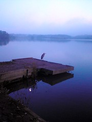 "Heron at Fleet Pond, Fleet UK (orbit9000) Tags: birds lakes birdwatcher wow1 fleetpond flickraward ""flickraward"""
