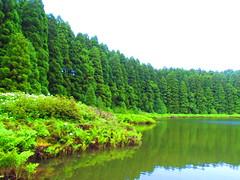 Lagoa do Canrio, Ilha de So Miguel (twiga_swala) Tags: lake portugal nature miguel forest landscape island lagoa sao portuguese ilha azores canario aores laurisilva empadadas
